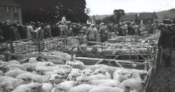 Findon, West Sussex, sheep fair in 1939